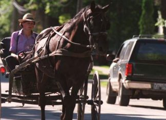 Amish children are strangely immune to asthma and it comes down to their adherence to old ways