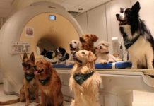 Dogs Can Actually Understand What Humans Are Saying, Study Says